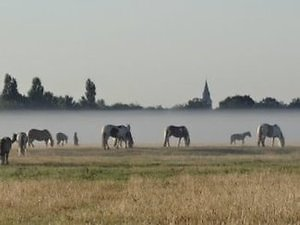 Home. horses port meadow